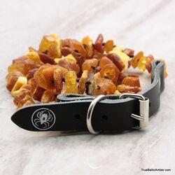 Baltic amber - unique tick repellant for Pets