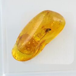 Trapped insect in Baltic amber with magnifying box