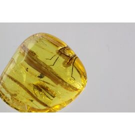 Part of Insect in Baltic Amber Fossil Specimen
