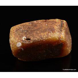 Large Egg Yolk Baltic amber fossil sea stone 146g