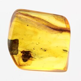 Big Gnat Insect in Baltic Amber Fossil Specimen