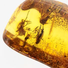 Swarm Insects in Baltic Amber Fossil Specimen