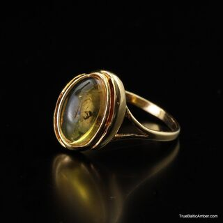 Baltic amber silver ring w ant insect inclusion
