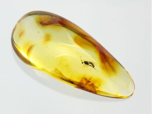 Gnat Insect inclusions in Baltic amber fossil stone