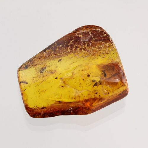 Swarm Insect inclusions in Baltic amber fossil stone