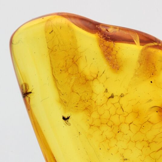 Gnats trapped in Baltic Amber Fossil Specimen