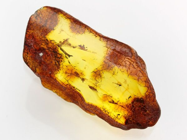 Insect inclusions in Baltic amber fossil large stone